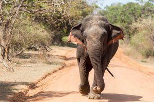 Tại sao Sri Lanka là một trong những thiên đường tự nhiên hoang dã nhất trên thế giới?