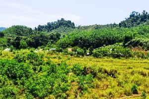 Quảng Nam: Các dự án thu hồi, chuyển mục đích sử dụng đất lúa, đất rừng phòng hộ, rừng đặc dụng phải có ý kiến của Thường trực HĐND