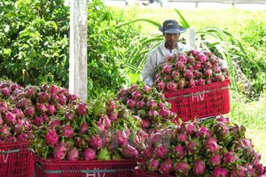 BẢN TIN TÀI CHÍNH - KINH DOANH: Nông sản Việt gặp khó, phấn đấu nợ công không quá 60% GDP