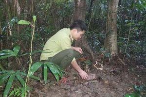 Thả 6 cá thể động vật hoang dã về môi trường tự nhiên