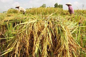 Ngành trồng trọt đặt mục tiêu xuất khẩu đạt 21 tỉ USD