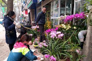 Hà Nội: Nhộn nhịp phố cây cảnh dịp cuối năm