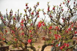 Những loại cây cảnh 'hút' tài lộc và may mắn trong dịp đầu năm mới