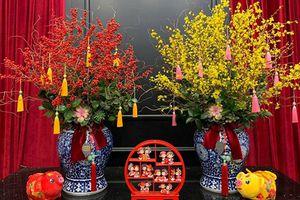 Nhiều hoa ngoại phục vụ Tết