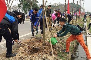 Hà Nội phấn đấu trồng mới khoảng 400.000 cây đô thị