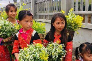 Trẻ em cao nguyên Mộc Châu rực rỡ sắc màu du xuân 'đốn tim' du khách