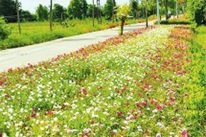 Gìn giữ bản sắc làng quê khi xây dựng nông thôn mới