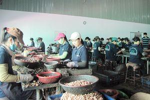 Bình Phước nâng cao chất lượng, giá trị nông sản chủ lực