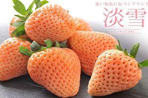 Trái cây Nhật Bản siêu đắt đỏ hút khách nhà giàu Việt dịp Tết
