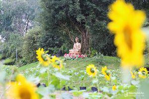 Rực rỡ vườn hoa ở chùa Đức Hậu đón Tết