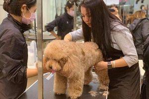 Làm đẹp cho thú cưng dịp Tết: Bạc triệu cũng bị 'đuổi'