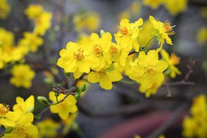 Bật mí 5 loại hoa đón tài lộc vào nhà ngày Tết