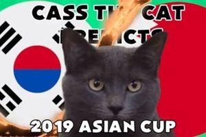 Mèo tiên tri Cass 'tái xuất' dự đoán kết quả trận Hàn Quốc - Bahrain