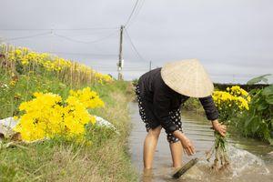 Sắc xuân rực rỡ trên làng hoa Tiên Nộn