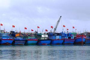 Sắc Xuân trên đảo Lý Sơn