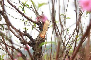 Nhiều vụ phá hoại hoa, màu quá nhẫn tâm khiến dư luận phẫn nộ