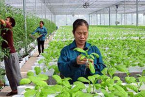 Dẹp 'xin-cho', mời doanh nghiệp đầu tư nông nghiệp