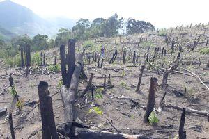 Bắt 5 đối tượng chặt phá 3.000m² rừng phòng hộ ở khu vực biên giới
