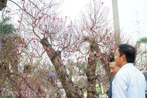 Ngập tràn sắc hoa chào đón xuân Kỷ Hợi