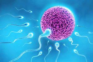 Nếu muốn thụ thai, chị em nhất định phải NẰM LÒNG 15 điều về rụng trứng sau đây