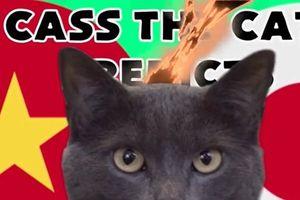 Clip: Mèo tiên tri tiếp tục gây shock khi dự đoán kết quả trận Việt Nam - Nhật Bản