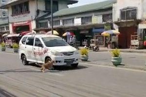 Cảm động chó mẹ 'van nài' ô tô qua đường dừng lại giúp chó con bị tai nạn