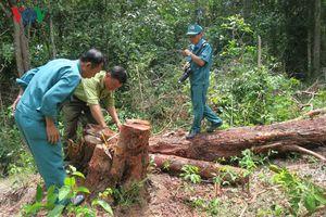 Khu rừng ở Tà Cú bị đầu độc bằng hóa chất trong thuốc diệt cỏ