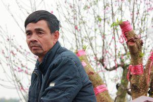 Công an Bắc Ninh chỉ đạo điều tra vụ phá hoại 147 gốc đào trước Tết
