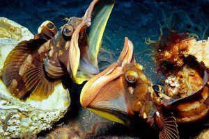 Top 10 quái vật biển đáng sợ nhất hành tinh