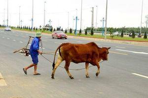 Nhức nhối qua đường tùy tiện