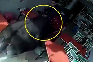 Clip: Trâu 'điên' sổng lò mổ, lùa người phụ nữ mặc áo đỏ chạy té khói
