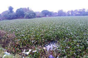 Danh thắng hồ Tịnh Tâm bị 'bức tử'