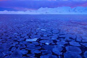 Phát hiện sự sống dưới lớp băng Nam cực