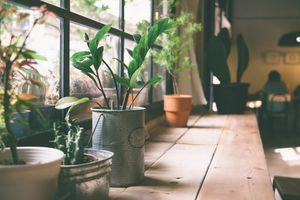 Khoa học nói gì về cây trồng trong nhà?