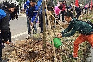 Hà Nội: Chuẩn bị tốt các điều kiện cho 'Tết trồng cây đời đời nhớ ơn Bác Hồ' Xuân Kỷ Hợi