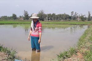 Hậu cao tốc Đà Nẵng – Quảng Ngãi: Dân khổ vì ruộng bị ngập úng
