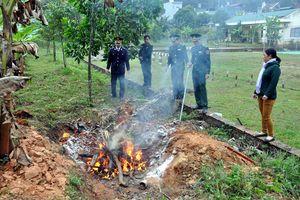 Đồn Biên phòng cửa khẩu Hoành Mô bắt vụ vận chuyển lậu gần 100kg gà