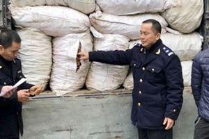 Ba kích Quảng Ninh lo mất 'thương hiệu' do nhập lậu tràn lan