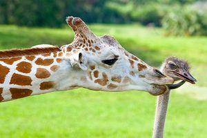 Tan chảy trước tình bạn đáng yêu giữa các loài động vật