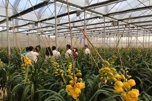Lâm Đồng nhờ trợ giúp để giải bài toán kẹt xe rau, hoa dịp tết