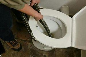 Đang đi vệ sinh, người phụ nữ bị trăn dài 1,5 mét cắn và phản ứng bất ngờ