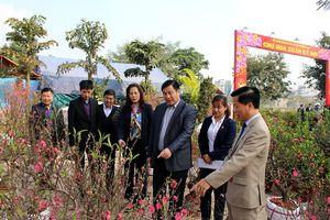 Quận Hoàng Mai: Khai mạc Chợ hoa Xuân Kỷ Hợi 2019