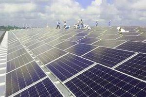 Tập đoàn Sao Mai phát triển năng lượng mặt trời ở vùng biên giới Tịnh Biên, An Giang