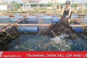 Nuôi cá lồng bè trên sông Đò Điệm, thu tiền tỷ dịp Tết