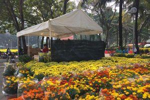 TP Hồ Chí Minh: Đồng loạt mở cửa các chợ hoa phục vụ Tết Kỷ Hợi 2019