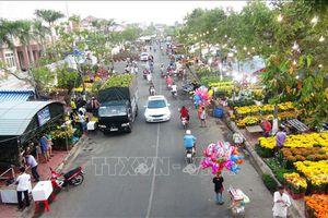 Trên 500.000 cây cảnh tại chợ hoa Xuân Kỷ Hợi 2019 ở Tây Ninh