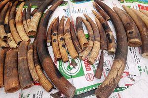 Hải Phòng: Phát hiện, thu giữ trên 500 kg ngà voi, vảy tê tê nhập lậu
