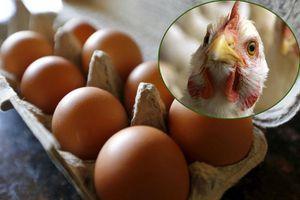 Biến đổi gien gà để lấy trứng chống ung thư
