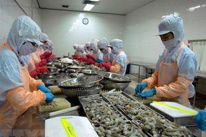 Chiến lược lâu dài phát triển ngành tôm: Nội tại chưa cân bằng