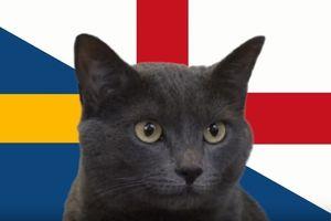 Mèo tiên tri dự đoán bất ngờ về kết quả trận bán kết Qatar và UAE